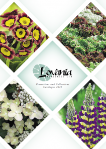 Lovania Catalogue 2019 Cover