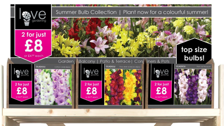 Summer Bulb Collection 2017