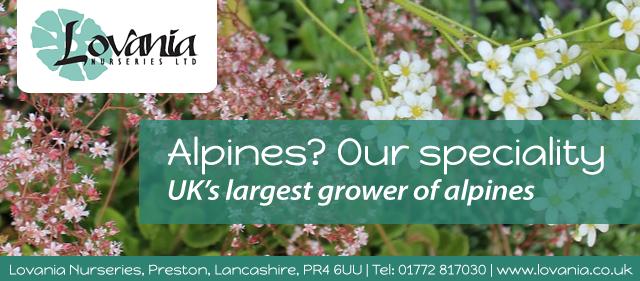 Alpine Plants Header