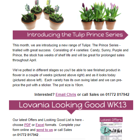 The lowdown: Alpines from Lovania Nurseries 2018