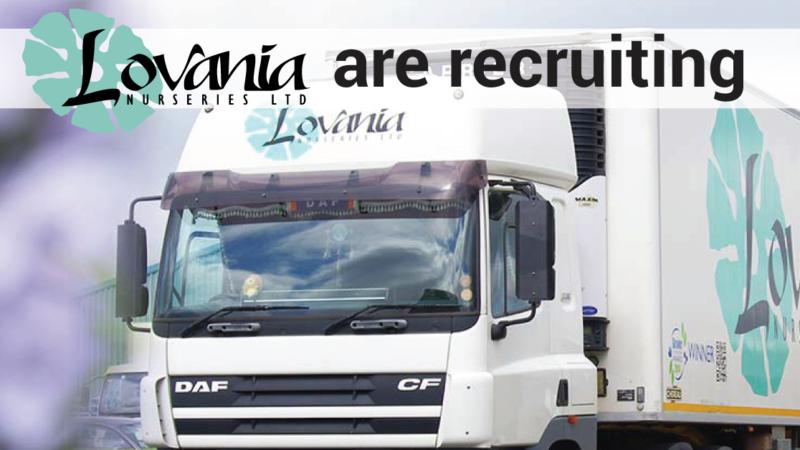 Lovania Recruitment
