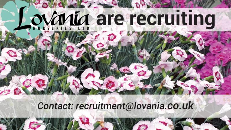 Recruiting-Lovania-2